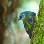 Oiseau à Lorne