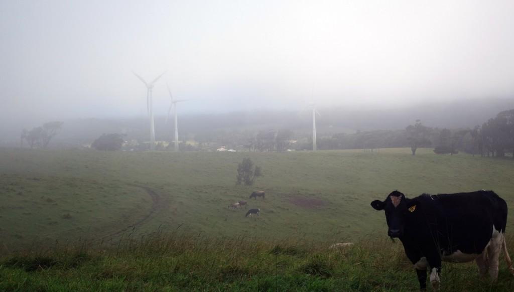 Windy Hill wind farm - En temps normal il y a 20 turbines..